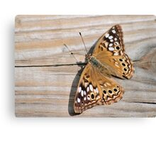 Butterfly On Deck Canvas Print