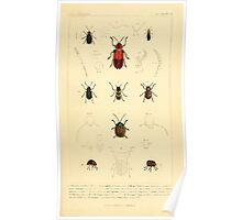 The Animal Kingdom by Georges Cuvier, PA Latreille, and Henry McMurtrie 1834  471 - Insecta Insects Poster