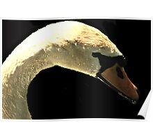 Beautiful White Swan Poster