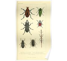 The Animal Kingdom by Georges Cuvier, PA Latreille, and Henry McMurtrie 1834  416 - Insecta Insects Poster