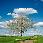 Lone Tree by TonyPriestley