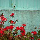 Color Combination by Tama Blough
