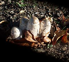 Autumn Mushrooms by Gregory John O'Flaherty