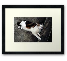Max - What a face! Framed Print