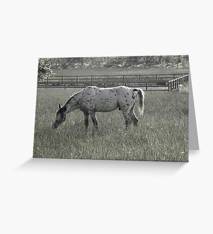 neighborhood horses(3) Greeting Card