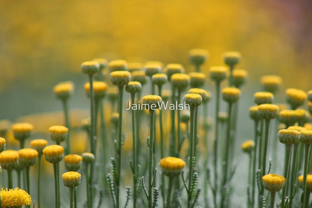 Yellow Stepping Stones by JaimeWalsh