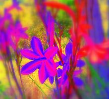 hot flowers by jimofozz