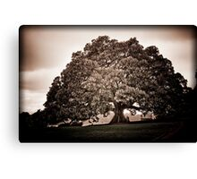 Now thats a tree Canvas Print