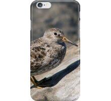 Purple Sandpiper I iPhone Case/Skin