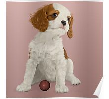 Cavalier King Charles Spaniel Puppy Poster