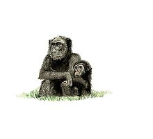 Apes Mother and Child by felissimha