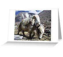 Yak, around the Kora Mt Kailash, Tibet Greeting Card
