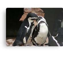 Penguin affection Metal Print