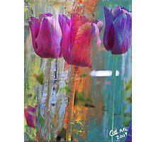 Hidden Tulips Photographic Print
