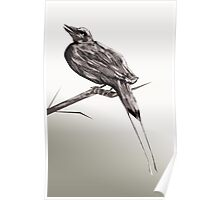 Long tailed blue bird 2 Poster