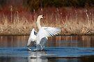 Dancing on Water by Renee Dawson