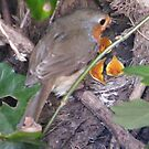 Family of Robins by ElsT