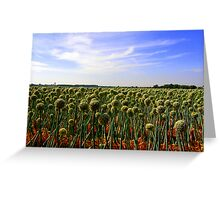 Onion Field Greeting Card
