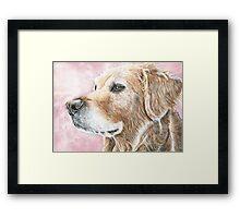 Faithful Companion - Labrador Framed Print