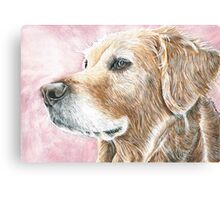 Faithful Companion - Labrador Canvas Print