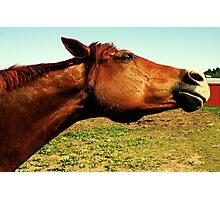 Crazy Horse Photographic Print