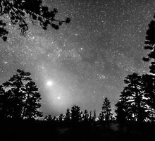 Forest Silhouettes Constellation Astronomy Gazing by Bo Insogna