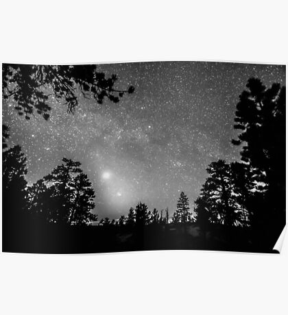 Forest Silhouettes Constellation Astronomy Gazing Poster