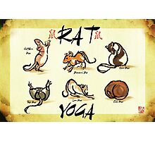 Rat Yoga Photographic Print