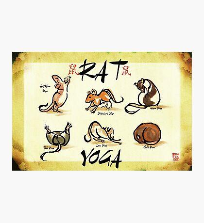 Rat Yoga Photographic Print