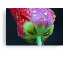Weeping tulip Canvas Print