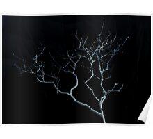 Dark Leafless Lilac Bush Poster