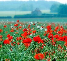 Poppy Field, Norfolk, England by Stephen Knowles