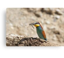 bee-eater Canvas Print