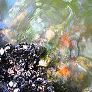 Starry Starry Sea by Sandra Fortier