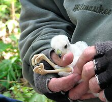 baby eagle by vizhen