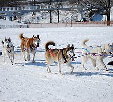 Dog Race by vizhen