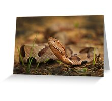 Southern Copperhead Greeting Card