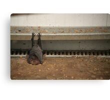 Crashed Out Canvas Print