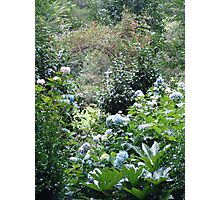Hydrangea path - June's Garden Photographic Print