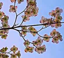 Dogwoods and Sky by John Butler