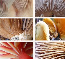 Six colourful Gills by Esther's Art and Photography