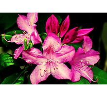 Springing to Life Photographic Print