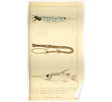 The Animal Kingdom by Georges Cuvier, PA Latreille, and Henry McMurtrie 1834  166 - Pisces Fish Poster