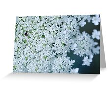 Faded Queen Ann's Lace Greeting Card