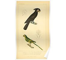 The Animal Kingdom by Georges Cuvier, PA Latreille, and Henry McMurtrie 1834 692 - Aves Avians Birds Poster