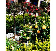Flowers In A Row Photographic Print