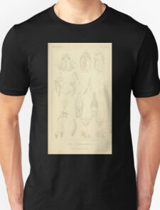 The Animal Kingdom by Georges Cuvier, PA Latreille, and Henry McMurtrie 1834  421 - Insecta Insects T-Shirt
