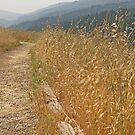 A Bello Path by Trish Peach