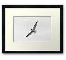 Blue Ribbon Seagull Framed Print