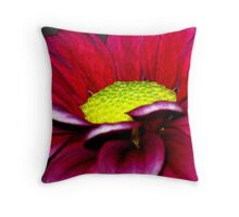 Up Close and Personal with Daisy  Throw Pillow
